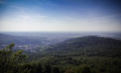 Schwarzwald-3