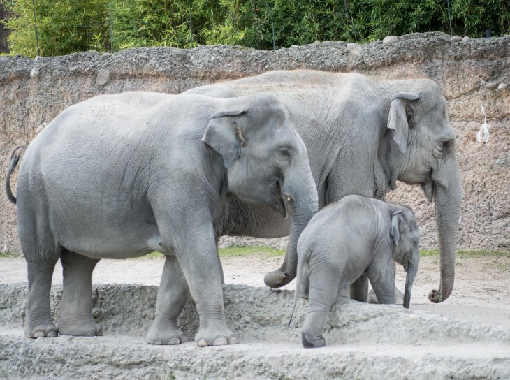 Zoo Zürich-9
